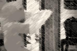 oso-leyuendo-negro